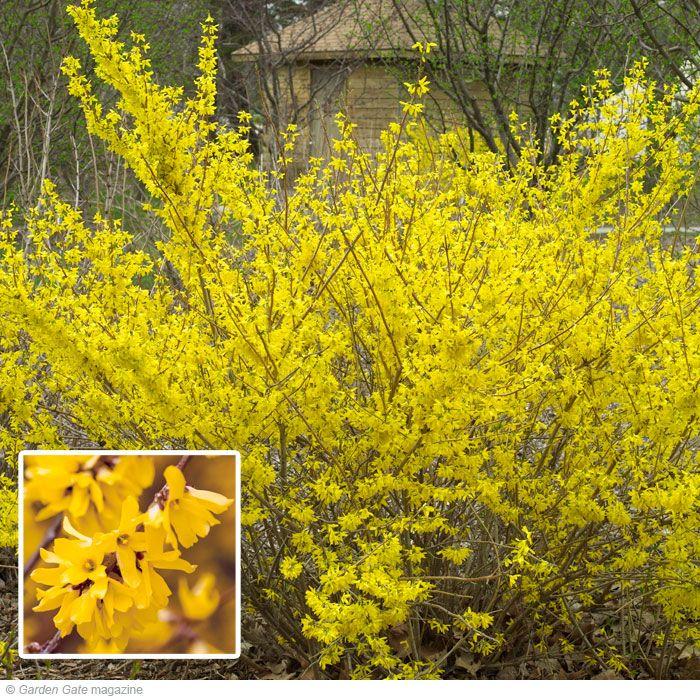 17 best ideas about full sun plants on pinterest sun for Flowering bushes for full sun