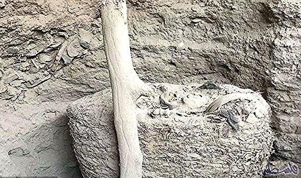 اكتشاف حزمة جنازة قديمة تحتوي على بقايا م حن طة لشخص د فن في بيرو