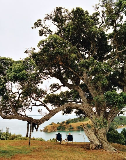 Lush Waiheke Island—three-quarters the size of Nantucket—is dominated by flowering pohutukawa trees.