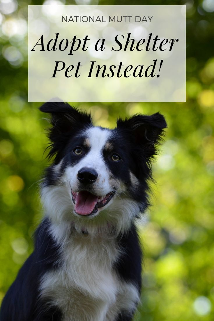 Adopt A Shelter Pet For National Mutt Day Dog Recall Dog