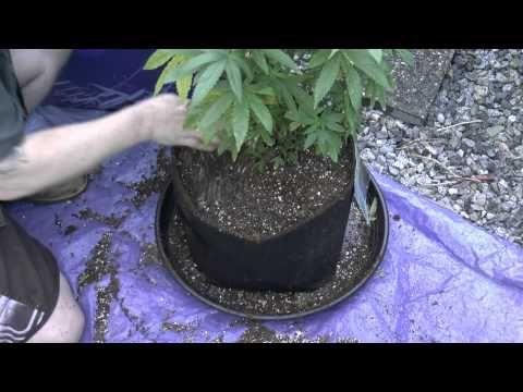 Baking Soils For Transplanting