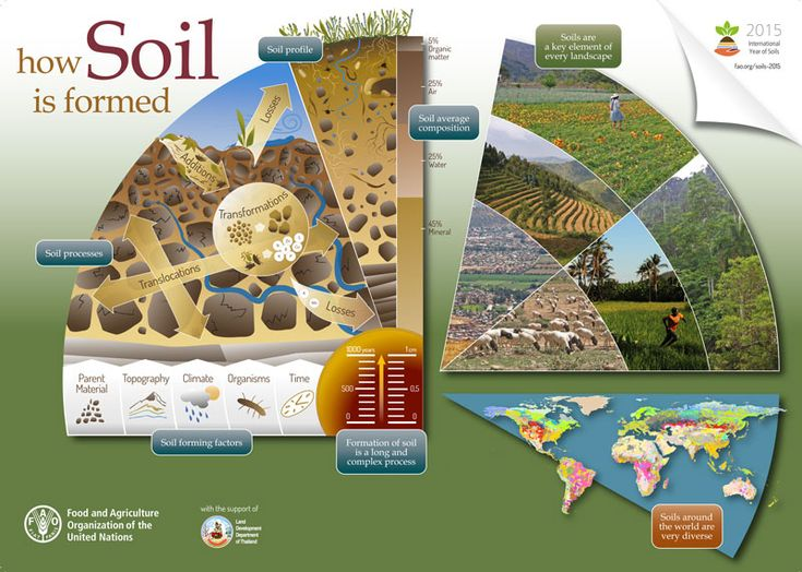 It can take up to 1000 years to form 1 cm of soil! Learn how soil is formed with this FAO Infographic.