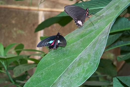 Amazon+Tropical+Rainforest+Animals | Amazon rainforest animals pictures, Ecuador tropical rainforest ...