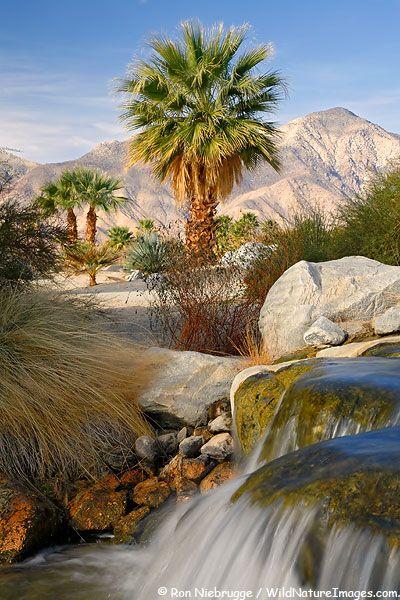 The Springs at Borrego RV Park, Borrego Springs, San Diego, California.  by Ron Niebrugge
