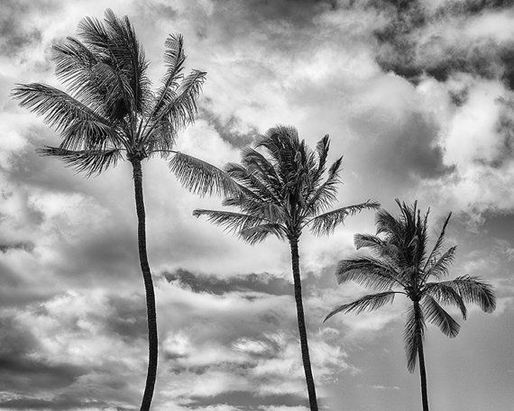 This image was made in March, 2014 while on vacation in Hawaii. This is a fine art quality black-and-white photograph.