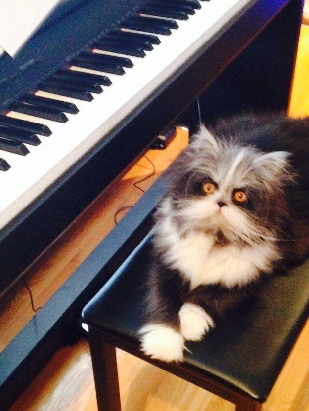 """""""It'll be important to at least pretend that you play one instrument. You can pick which one."""" 