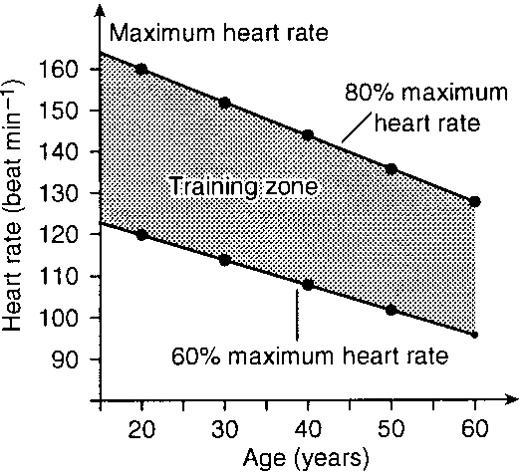 17 Best Images About Heart Rate On Pinterest