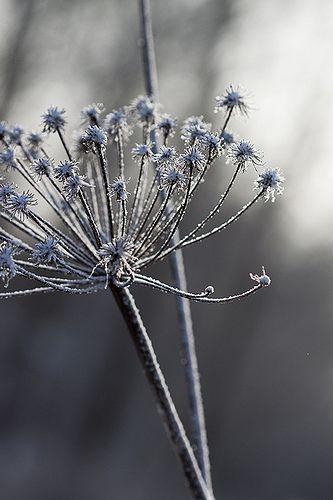 Grey Botanical