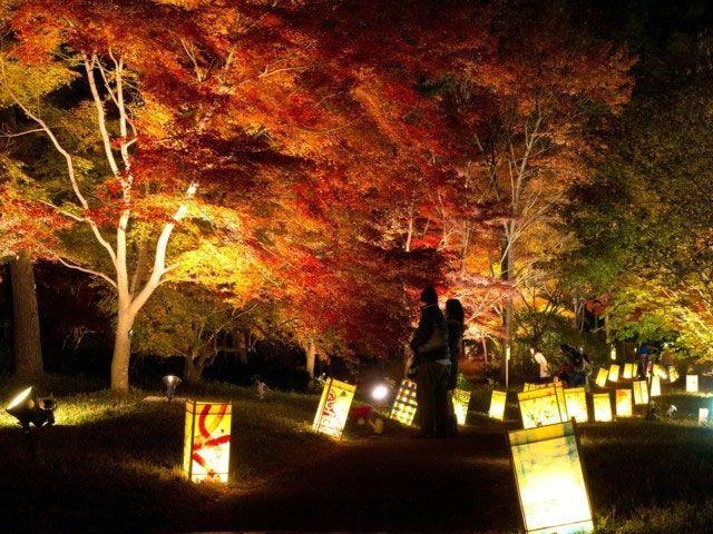 埼玉県の国営武蔵丘陵森林公園の2017紅葉情報。例年の色づき時期や見頃、地図・天気・交通アクセス情報はもちろん、ライトアップ日時やイベントなど開催情報をご案内。クチコミ・穴場情報も募集しています。