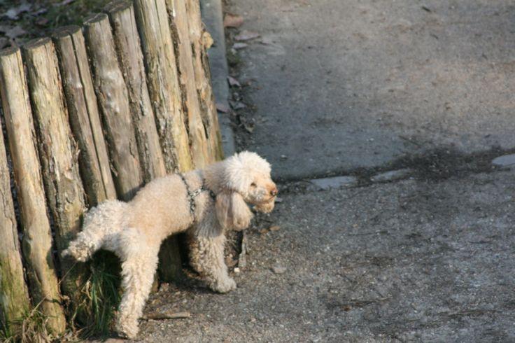 Le bicarbonate de soude contre les odeurs d'urine de chien et chat