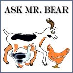 Ask Mr. Bear printables
