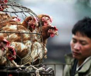Ban on Live Poultry Imports from Mainland China Extended in Hong Kong to Prevent Bird Flu