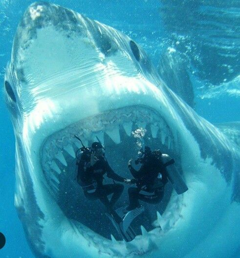 Pa-leeeeez!!!! | Sharks scary, Megalodon, Shark pictures