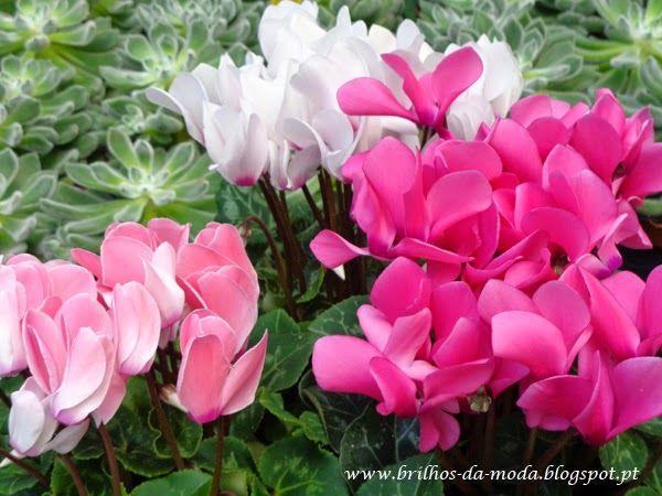 Brilhos da Moda: Flores, uma maravilha da natureza # 46
