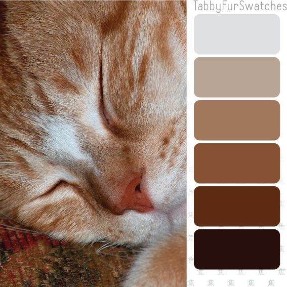 Tabby Fur Swatches