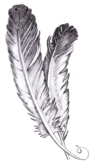Drawing of Feathers