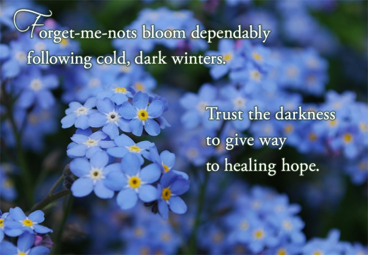 Forget-me-nots are the flower for miscarriage.