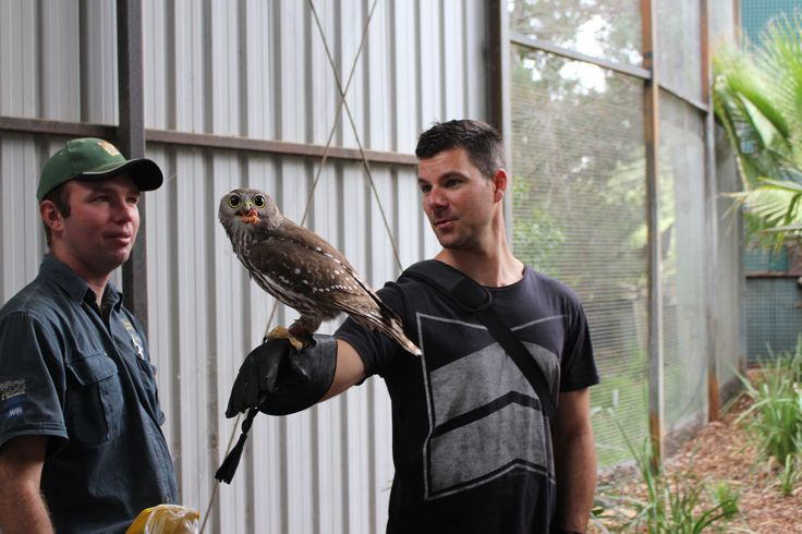 Instagrammer @tashasaur_ and her guests met Ruby the Barking Owl at the National Zoo & Aquarium Canberra. #humanbrochure