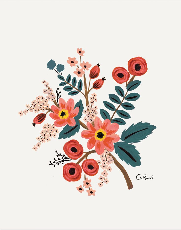 Coral Botanical - Illustrated Art Print by Anna Bond of Rifle Paper Co.