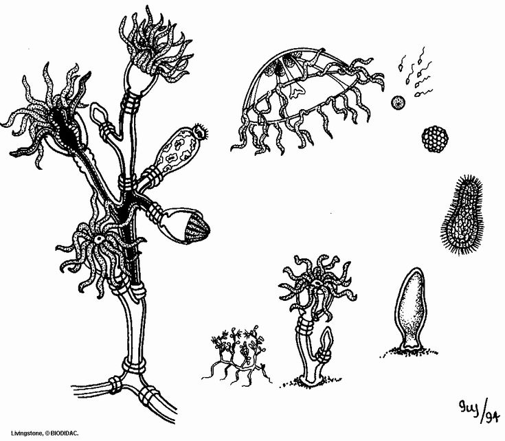 Plant Life Cycle Coloring Page Best Of Biodidac
