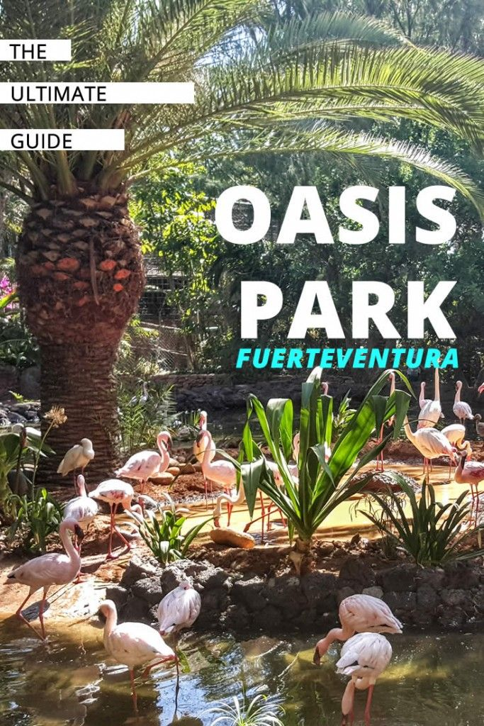 Oasis Park Fuerteventura - Probably the best Zoo and Botanical Garden in Europe