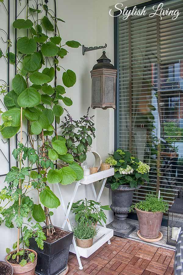 balkonbegr nung und kletterpflanzen die jede wand glamour ser aussehen lassen my home. Black Bedroom Furniture Sets. Home Design Ideas