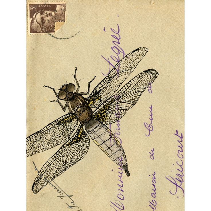 Envelope with dragonflyMailart, Dragonflies Mail, Dragonflies Vintage