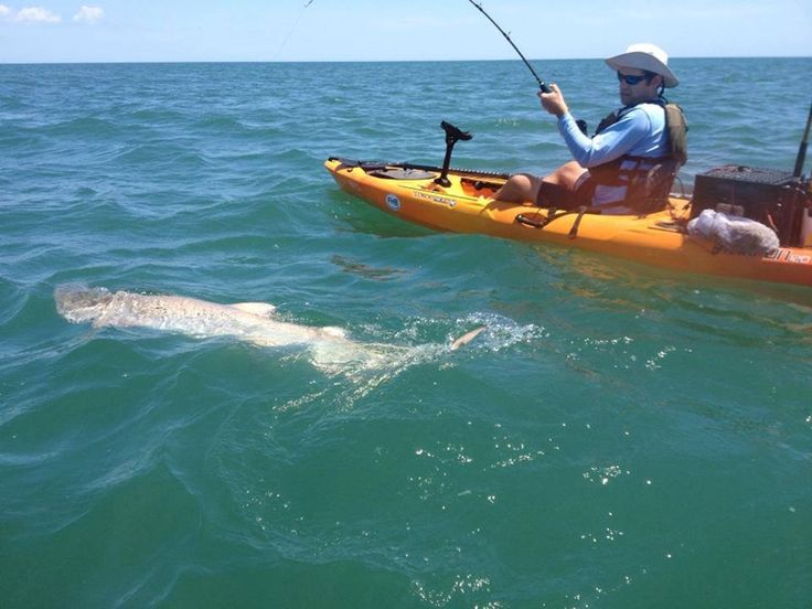 62 best fishing images on pinterest kayak fishing for Outer banks surf fishing tips