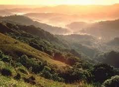 O Parque Florestal Nacional El Yunque fica no lado nordeste de Porto Rico e é a única floresta tropical no Sistema Florestal Nacional dos Estados Unidos. A floresta está situada nas encostas da Serra de Luquillo e cobre uma área 113,3 quilômetros quadrados. A fl