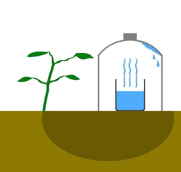 Vatten är en värdefull resurs som ingen borde slösa. Mycket av vattnet som används när man odlar evaporeras med solen, men idag visar vi er ett smartare och billigare sätt att vattnat era växter…