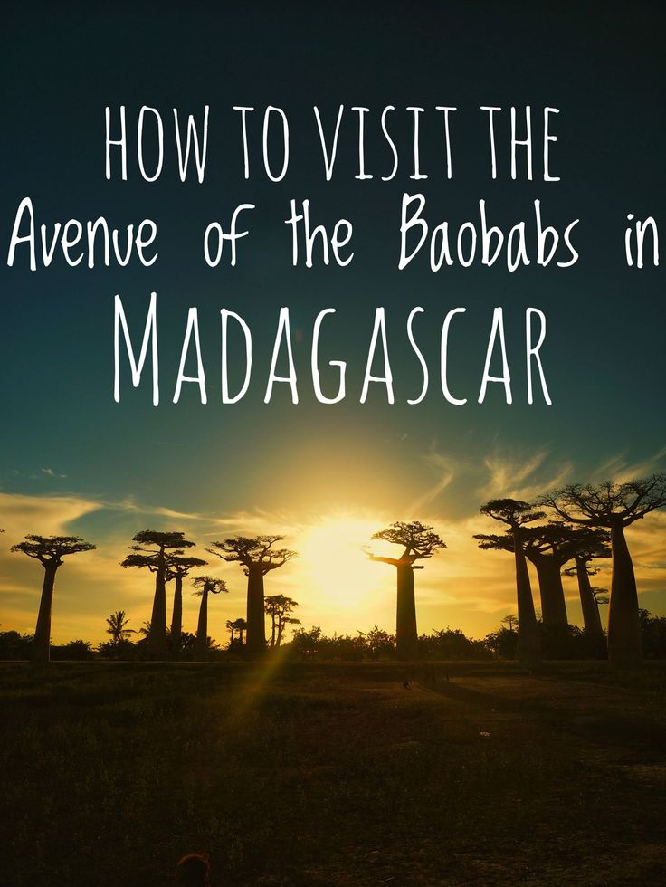 How to visit theAvenue Of The Baobabs in Madagascar, one of the most famous landmarks in all of Africa. Travel guide to Madagascar.