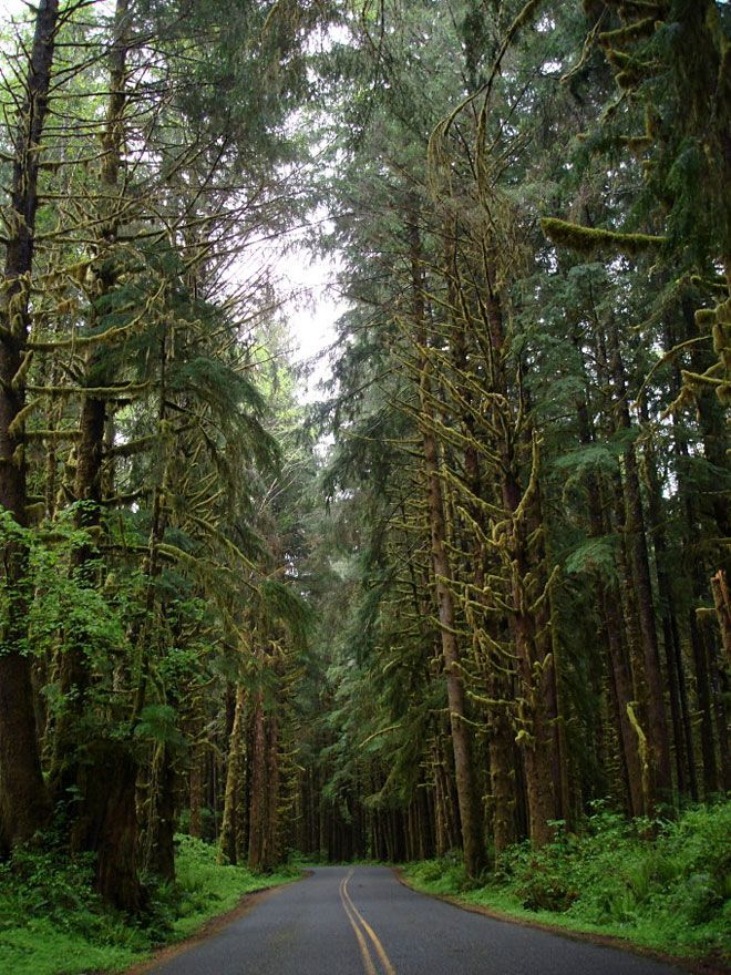 Miss Moss : Forest