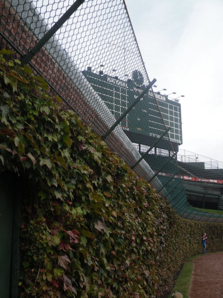 Wrigley Field (Chicago Cubs)  First And Favorite U003c3
