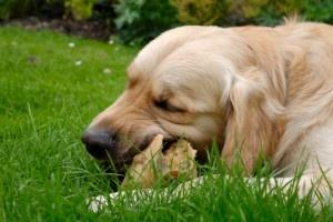Raw Diet for Pets: Cat Pet, Dogs Stuff, Pet Care, Animal Health, Commercial Pet, Food Diet, Cat Raw Diet, Pet Food, Dogs Treats