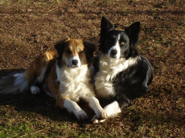 Lucy and Lily - my beautiful dogs.