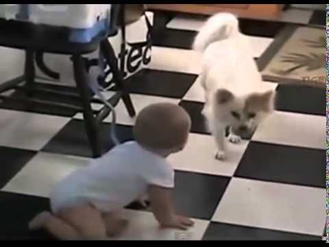 Video Lucu Bayi Dan Anjing http://www.youtube.com/watch?v=xSAzW59fgTE&feature=youtu.be