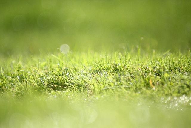Grassy Grass Grass...: Green Serenity, Grass I, Grass Grass, Grass Groundtec, Grass Splendidsumm, Cut Grass, Mow Grass, Green Grass, Grassi Grass