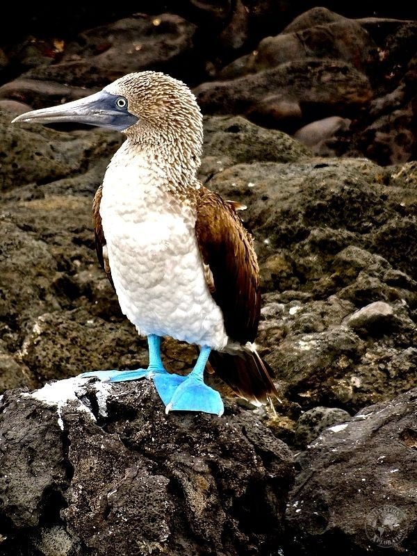 Galapagos Xploration. Experience the Galapagos on a budget. Book your Galapagos cruise with GAdventures