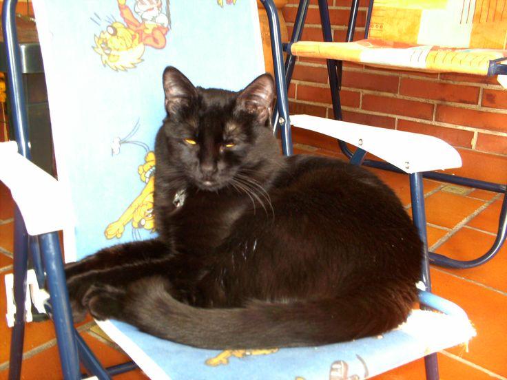 Salem descansando