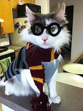 Harry Potter Cat Halloween Costume