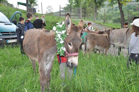 St Martin Day, November 11th is also Donkey Day. Read the beautiful story & nice tradition in France. ~  St Martin loses his Donkey in Domaine Bollenberg. He asks the children to help in finding him. Since it's dark the children improvise a lamp out of a carved beet and with St Martin, they go all together singing in search of the Donkey. They find him & St Martin to thank the children gave them little bread buns (legend says they were the Donkey's droppings transformed