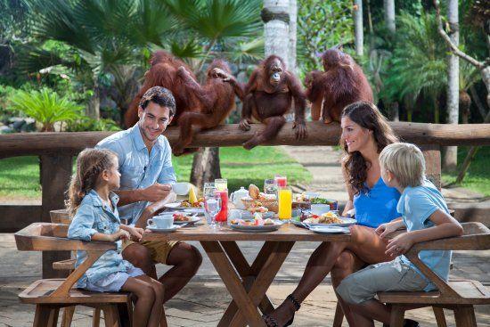 Bali Zoo: Breakfast with Orangutans - See 2,782 traveler reviews, 2,520 candid photos, and great deals for Sukawati, Indonesia, at TripAdvisor.