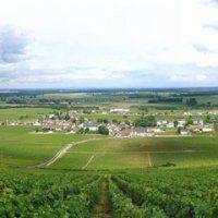 Vins de Bourgogne : Vosne Romanée Les Suchots et Pommard Grand CLos des Épenots - La Revue du vin de France