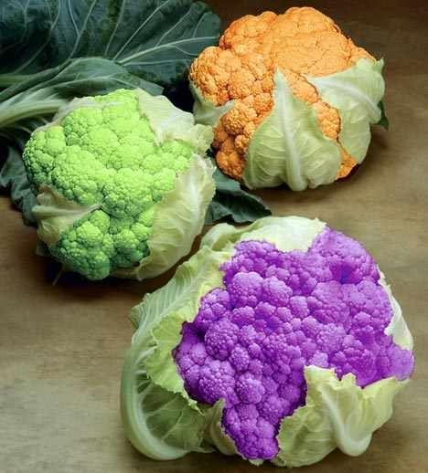 Three colors of cauliflowers DIFERENTES COLORES DE COLIFLOR