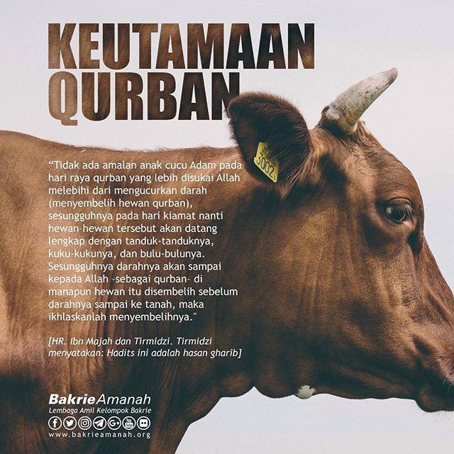 Ayo Qurban