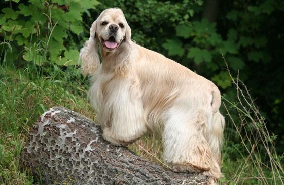 Karmy bez kurczaka dla psów:  http://www.kakadu.pl/Karmy-dla-psow/karmy-bez-kurczaka-dla-psow.html
