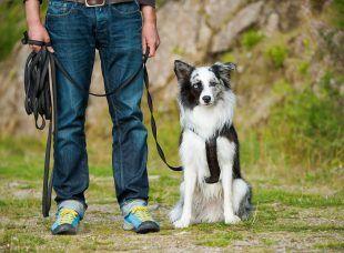 Zum Hund wünscht man sich eine Beziehung, die ohne Zwänge funktioniert. Doch was tun, wenn Bello nicht so will wie wir? Ein Erziehungsratgeber.