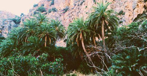 Μωσαϊκό: νότιο τμήμα του Ρεθύμνου ...μες στο Φοινικόδασος