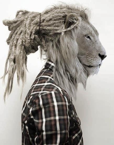 Interesting I got dreads to look like a lion haha!