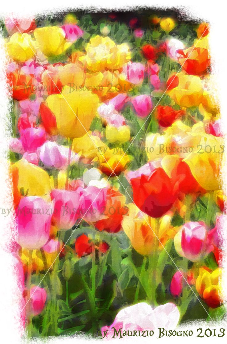 Tulips, watercolour effect